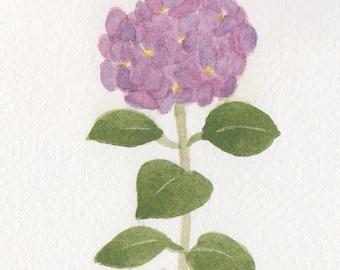 Purple Hydrangea  5x7 Matted Original Watercolor by Wandas's Watercolors