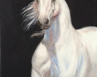 Original horse oil painting Nicolae Equine Art Lusitiano White Spanish breed Nicole Smith Artist 8x10