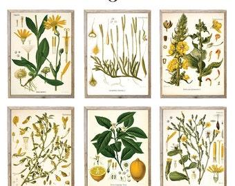Set of Any SIX Botanical Illustrations - giclee prints, choose your size, choose 6 designs - Botanicals, Vintage, Illustration, Art, Decor