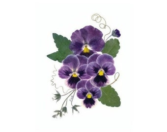 Pansies, Pressed Flower Cards, Set of 6 Notecards - -#050