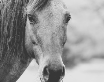 Horse photography horses rustic home decor black and white photography country home decor large wall art