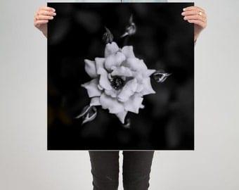 "Floral 6 ( 24"" X 24"" Print )"