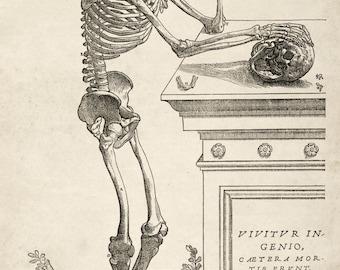 "Andreas Vesalius Human Anatomy Print : ""Skeleton Contemplating a Skull"" (1543) - Giclee Fine Art Reproduction"