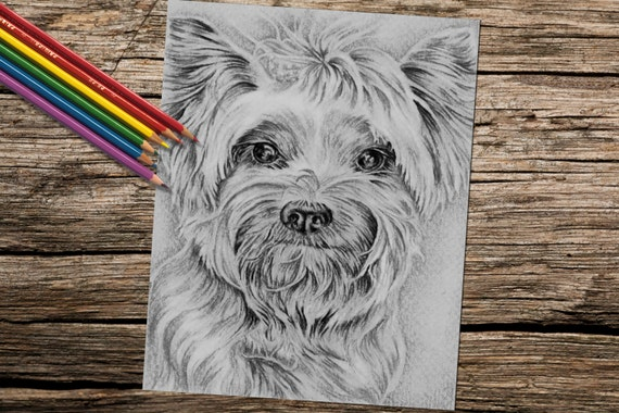 yorkie coloring page - yorkie dog coloring book page grayscale adult coloring book
