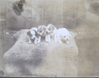 Four Puppies - Odd Outdoor 1880's Cabinet Card Photo - Free Shipping