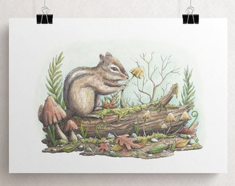 Print A4 Curius Squirrel illustration - eco paper