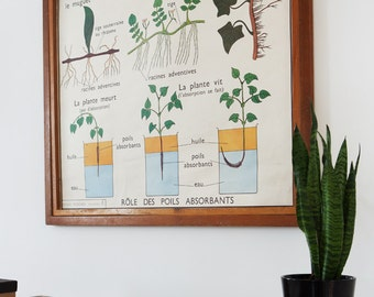 No. 3 & No. 4 - Large Vintage double-sided French school poster - The Adventitous Root and The Stems