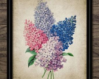 Lilac Flower Print - Lilac Plant Illustration - Botanical Flower Art - Digital Art - Printable Art - Single Print #221 - INSTANT DOWNLOAD