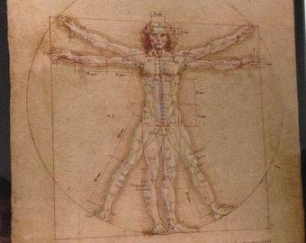 Vitruvian Man Acupuncture Wall Chart