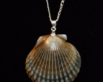 Shell Necklace - Calico Scallop
