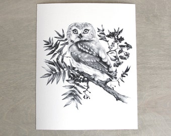 Saw Whet Owl Print 8x10 Fine Art Archival Print
