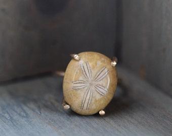Sea Urchin Ring. Fossil Echinoid on 14k Gold Fill. Natural Sea Fossil Jewelry. Sea Urchin Jewelry. Fossilized Echinoid Gold Prong Ring