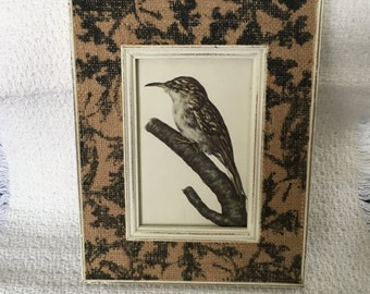 """BP Designer Frames, Nuthatch, European Nuthatch, Wood Nuthatch, Burlap Black Floral Pattern, Antique White, Song Bird Picture, 7.5"""" x 9.5"""""""