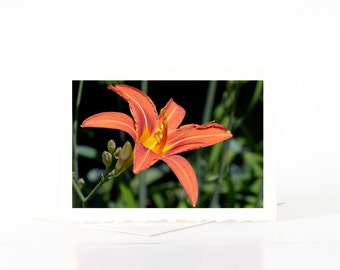 Common Orange Daylily Blank Photo Greeting Cards, Lily Flower, Summer Flowers,  Flower Photography, Nature Photography