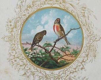 Antique Redpoll Illustration