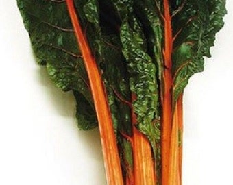 250 Seeds Swiss Chard Orange Fantasia Garden Seeds Swiss Chard Seeds