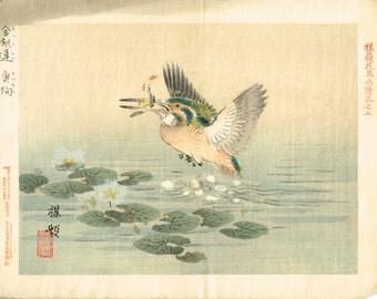 "1893, Japanese Woodblock print, antique, Kono Bairei, ""Water snowflake, Common Kingfisher"""