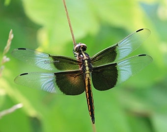 Dragonfly, photo, print, art, insects, photography, nature, wildlife, wall art, home decor, nature photography, free shipping