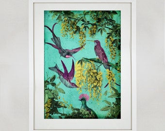 Hummingbirds of California A3 Print