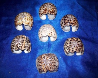 Tiger Cowrie Shell Napkin Houlders