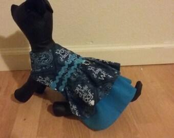 turquiose dog dress