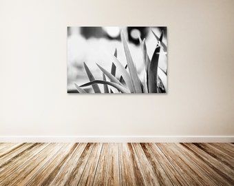 """Black and White Canvas Art, Black and White Nature Photography, Botanical Art, Nature Wall Decor, Large Canvas Art - """"Gentle"""""""