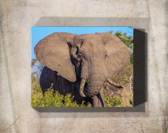 Elephant, Elephant Canvas, Gallery Wrap Canvas, Canvas Wall Art, Canvas Print, Large Canvas Art, Wildlife Photography, Wildlife Print