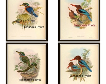 Set of four Vintage Bird Prints. Plate 33,34,35, and 36