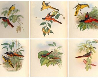 "Set of Six Bird 8"" X 10"" prints from the 1800's"