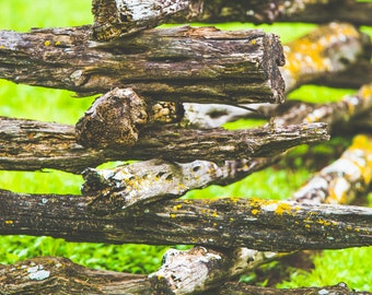 Natural Wood Fence - FINE ART PRINT