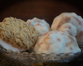 Conch Shell Goat's Milk & Olive Oil Soap w/Embedded Natural Sea Wool Sponge