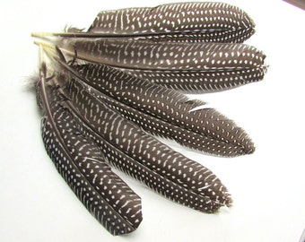 10 Natural Guinea Fowl Feather Quills 5-7 inch long. Natural feathers. Feather crowns, Dreamcatcher. UK Seller