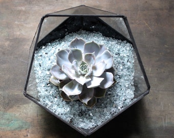 Handmade glass icosahedron terrarium