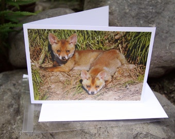 Fox Cubs Lazing In The Sunday Morning Sun (Greeting Card)