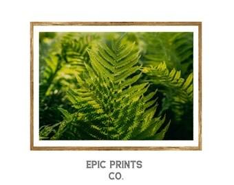 Fern Wall Art, Nature Botanical Print Set, Botanical Art, Botanical Illustration, Botanical Vintage Art, Fern Art, Fern Print