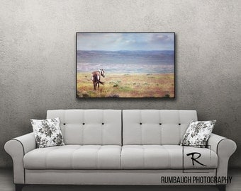 Wild horse art-Print/dry mount ~ 'Picasso at Peace'
