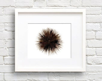 Sea Urchin Art Print - Wall Decor - Watercolor Painting