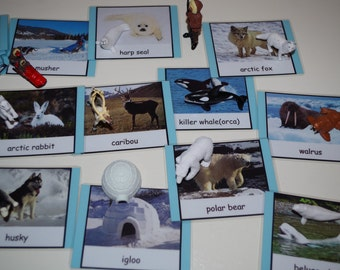 Arctic 3-part cards--Montessori early learning educational materials