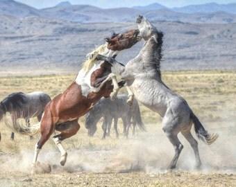 The Fight is On! Utah Wild Horses