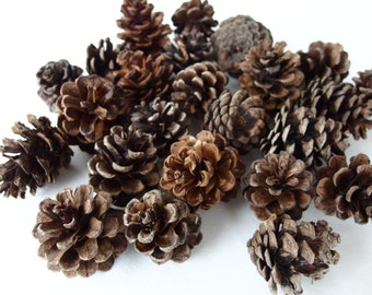 Real Pinecones Natural Pinecones Organic Pinecones Thanksgiving Decor Rustic Decor Holiday Crafts Fall Decor Fall Crafts Holiday Decor 24