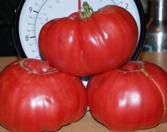 Tomato Oxheart (100,200,400,800,1600 seeds) Giant bulk heirloom #218