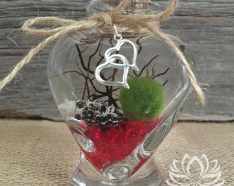 Marimo Heart Jar Aquarium with Heart Charm by Zentilly©