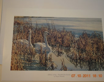Spring Song - Trumpeter Swans by Wayne Meineke, Lithograph, Limited Edition 361/800, Signed by Artist