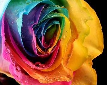 Abstract Multicolored Rose