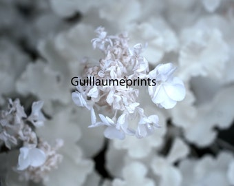 Infrared flowers