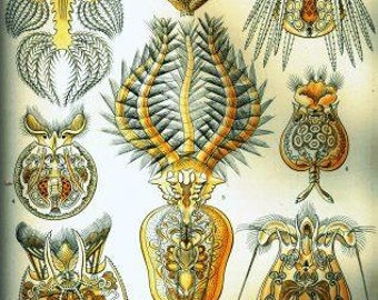 Ernst Haeckel Rotatoria art Digital vintage Sea crustacea artwork Printable poster Download craft scrapbooking decoupage Ihappywhenyouhappy