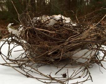 BIRD NEST, Authentic Natural Bird Nest