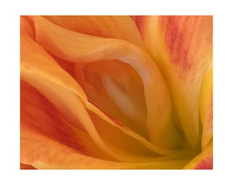 Day Lily No. 1; Day Lily I - Macro Botanical Flower Print - FREE SHIPPING