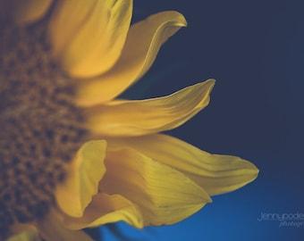 Fine Art Photography - Sunflower