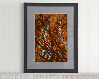 Stylized Trees (002)
